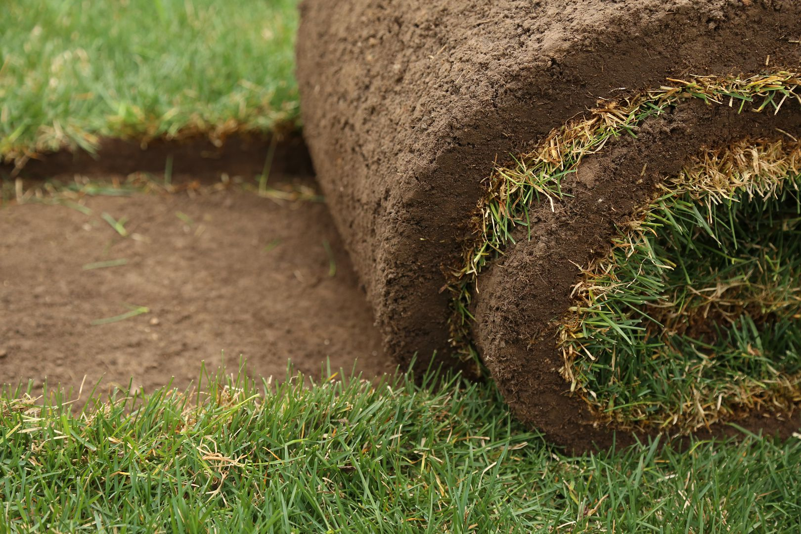 Sod rolled up closeup